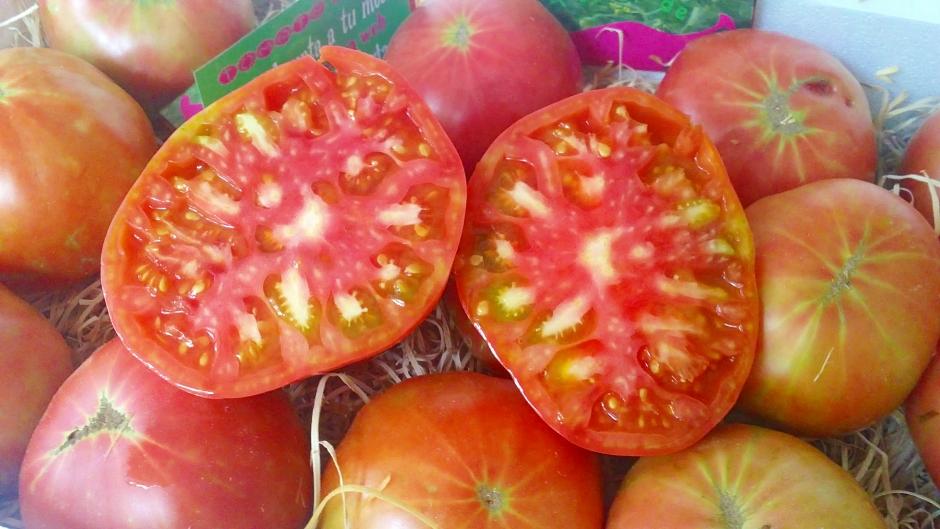 Jornada técnica sobre el futuro del Tomate Rosa de Barbastro